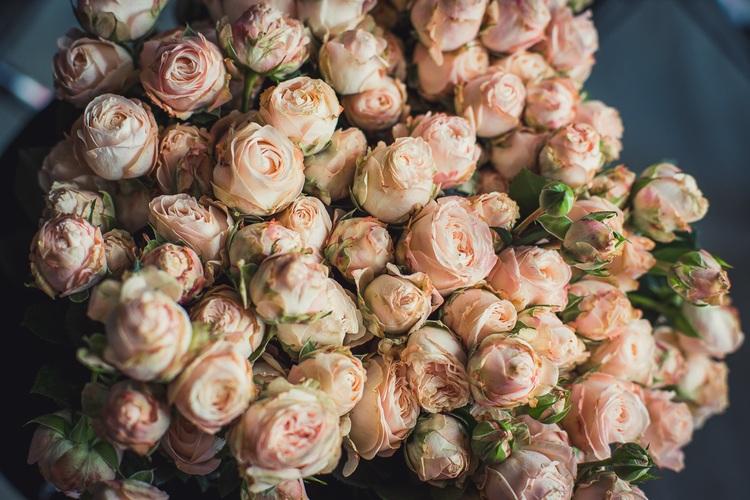пионовидные розы кустовые фото