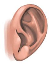 Урок: Рисуем уши