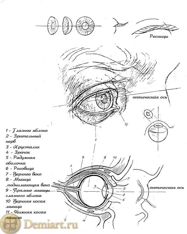 Урок: Рисуем глаза (доб. рис.