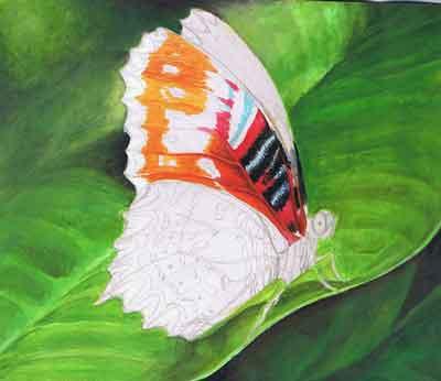 Бабочки акриловыми красками