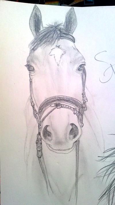 Пропорции лошадиной головы