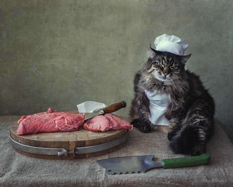 Картинки кот мясника