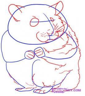 Рисуем хомячка! Haw to Draw a Hamster