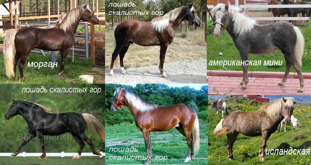 Рисуем лошадь - Масти (Часть 1)
