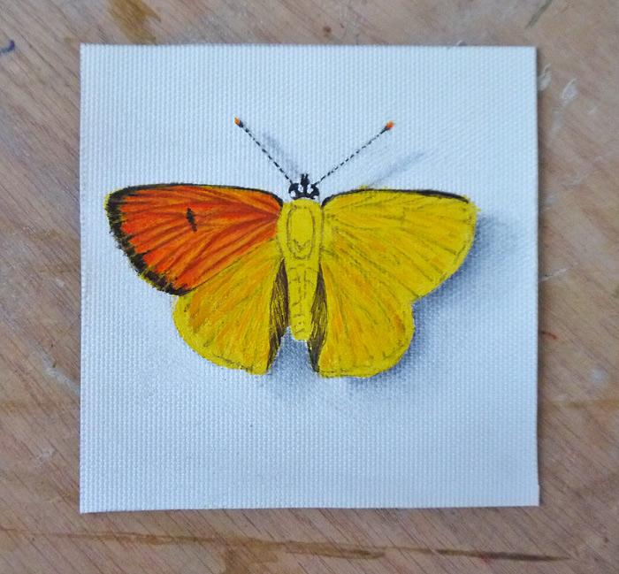 Маленькая бабочка акрилом